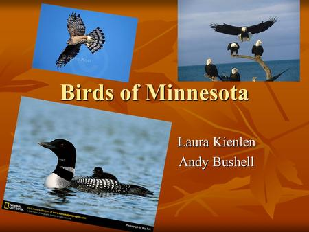 Birds of Minnesota Laura Kienlen Andy Bushell 21 Common Birds Common Loon (Gavia immer) Common Loon (Gavia immer) Food Sources: Fish and aquatic insects.