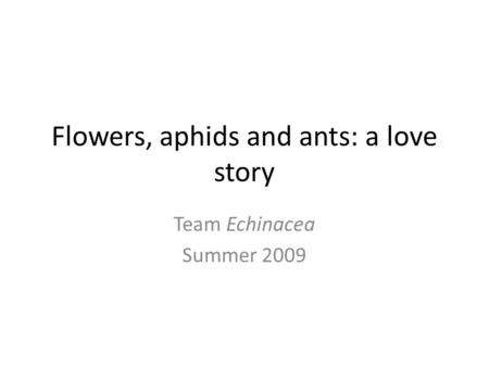 Flowers, aphids and ants: a love story Team Echinacea Summer 2009.
