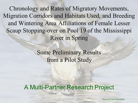 Chronology and Rates of Migratory Movements, Migration Corridors and Habitats Used, and Breeding and Wintering Area Affiliations of Female Lesser Scaup.