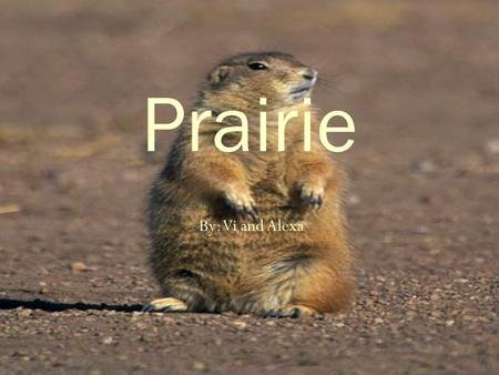 Prairie By: Vi and Alexa.