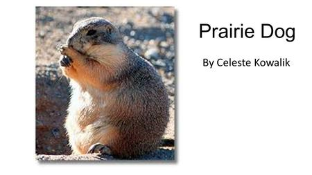 Prairie Dog By Celeste Kowalik. Prairie Dogs Eat Plants, Grass, and Insects.