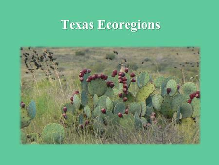 Texas Ecoregions. 1 − East Texas Pineywoods 2 – Gulf Coast Prairies and Marshes Marshes 3 – Post Oak Savannah 4 – Blackland Prairies 5 – Cross Timbers.