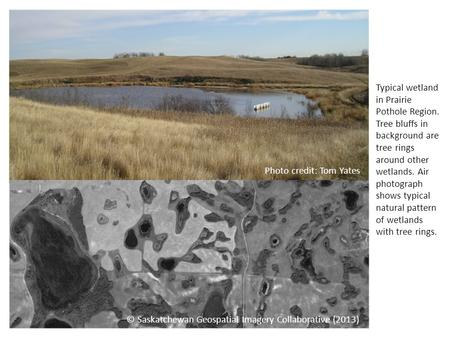 Typical wetland in Prairie Pothole Region. Tree bluffs in background are tree rings around other wetlands. Air photograph shows typical natural pattern.