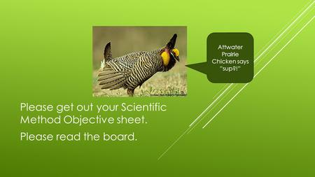 "Please get out your Scientific Method Objective sheet. Please read the board. Attwater Prairie Chicken says ""sup?!"""