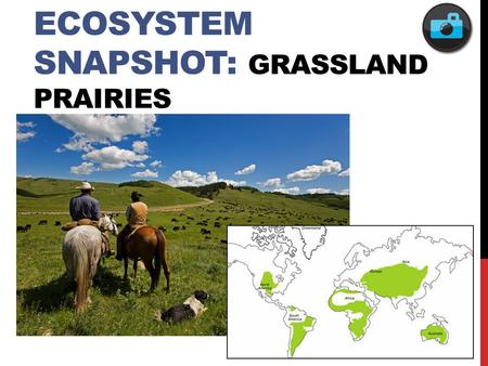 ECOSYSTEM SNAPSHOT: GRASSLAND PRAIRIES. FEATURED POPULATION: BUMBLE BEES.