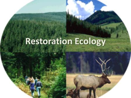 Restoration Ecology. Key terms Intervention Mitigation Reallocation Reclamation Re-creation Rehabilitation Remediation Restoration.