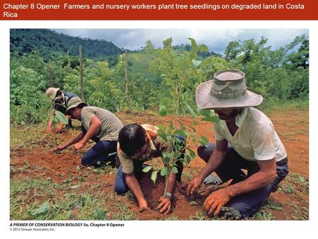 Chapter 8 Opener Farmers and nursery workers plant tree seedlings on degraded land in Costa Rica.