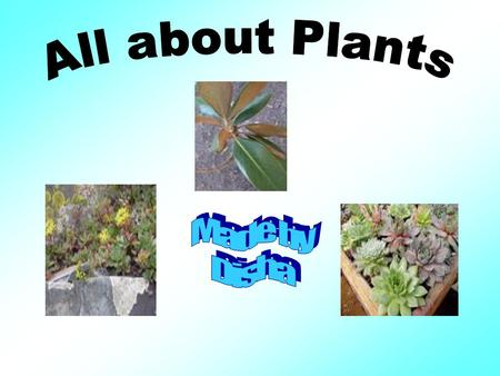 Parts of the plants Where do Plants come from? How does pollination works? How are plants important to us? How does chlorophyll help plants to grow?
