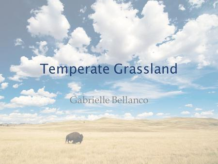 Temperate Grassland Gabrielle Bellanco. Geography North America: – Great Plains – Southern Canada to Gulf of Mexico – Rocky Mountains to deciduous forests.