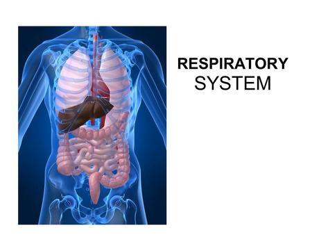 RESPIRATORY SYSTEM. PRIMARY FUNCTIONS Exchange gases (oxygen and CO2) Takes up oxygen from air and supplies it to blood (for cellular respiration).