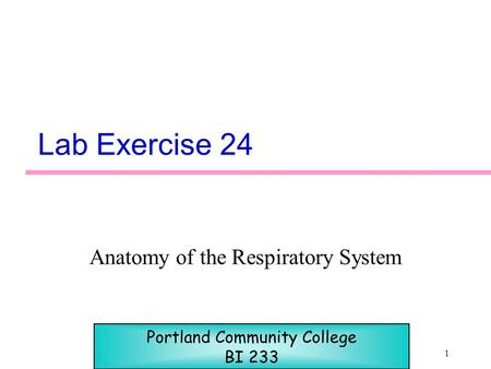 1 Lab Exercise 24 Anatomy of the Respiratory System Portland Community College BI 233.