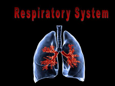 1.Breathing 2.External Respiration 3.Internal Respiration 4.Cellular Respiration 4 PROCESSES.