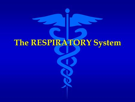 The RESPIRATORY System. Functions of the Respiratory System Provides structures and mechanisms for gas exchange Provides structures and mechanisms for.