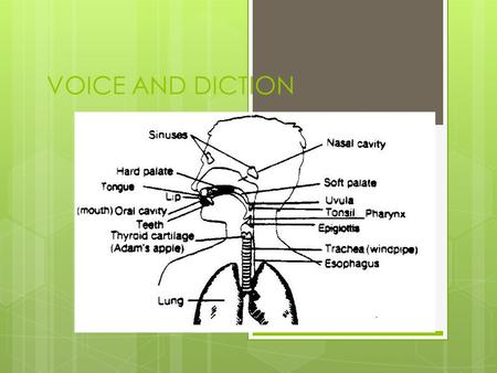 VOICE AND DICTION.
