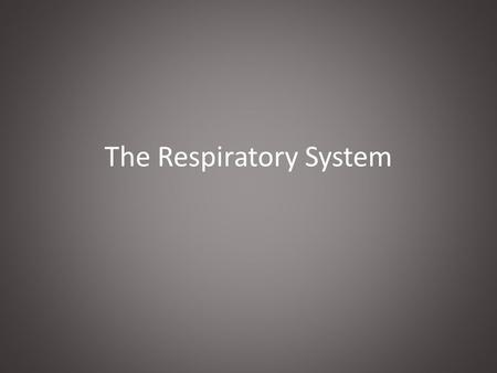 The Respiratory System. Anatomy Lungs and Air Passages A.Nose, pharynx, larynx, trachea, bronchi, alveoli and lungs B.Responsible for: 1.Taking in O2.