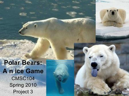 Polar Bears: A n ice Game CMSC104 Spring 2010 Project 3
