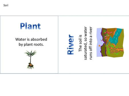 Water is absorbed by plant roots. The soil is saturated, so water runs off into a river Soil.