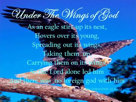 Under The Wings of God As an eagle stirs up its nest,