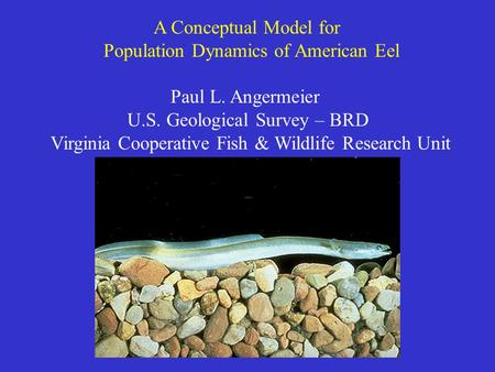 A Conceptual Model for Population Dynamics of American Eel Paul L. Angermeier U.S. Geological Survey – BRD Virginia Cooperative Fish & Wildlife Research.