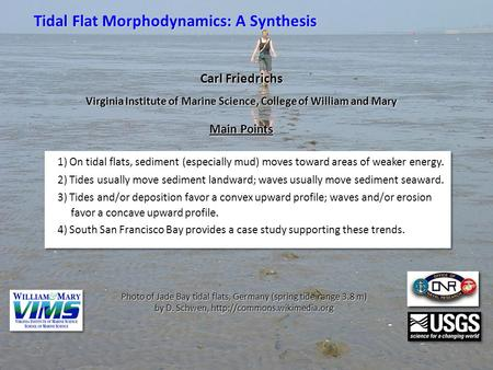 Tidal Flat Morphodynamics: A Synthesis 1) On tidal flats, sediment (especially mud) moves toward areas of weaker energy. 2) Tides usually move sediment.