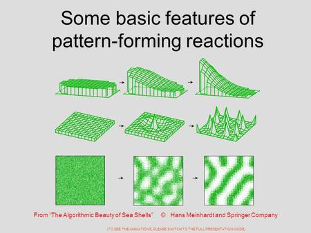 "Some basic features of pattern-forming reactions From ""The Algorithmic Beauty of Sea Shells"" © Hans Meinhardt and Springer Company (TO SEE THE ANIMATIONS,"