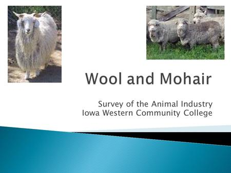 Survey of the Animal Industry Iowa Western Community College.
