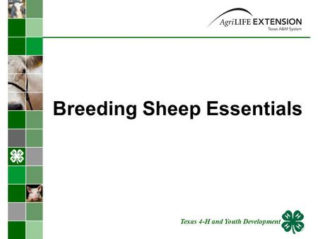 Breeding Sheep Essentials Texas 4-H and Youth Development.