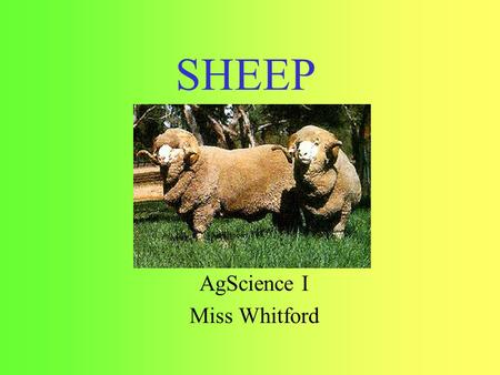 SHEEP AgScience I Miss Whitford. Overview Breeds Common Terms Parts.