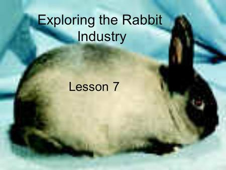 Exploring the Rabbit Industry Lesson 7. Interest Approach What are 2 different types of rabbit breeds? What is the purpose of rabbits in today's world?