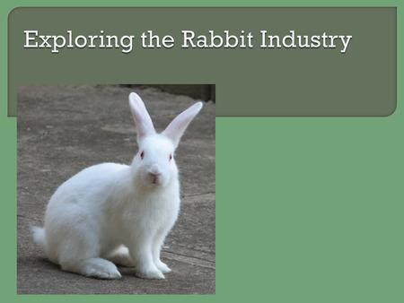  What is a rabbit breed that you are familiar with?  What is the purpose of rabbits in today's world?