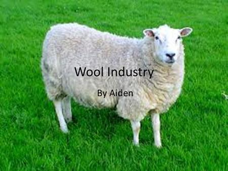 Wool Industry By Aiden.
