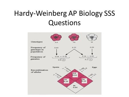 Hardy-Weinberg AP Biology SSS Questions. The basics/reminders p = the frequency of the dominant allele q = the frequency of the recessive allele p + q.