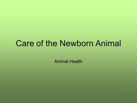 1 Care of the Newborn Animal Animal Health. 2 Movie of student processing newborn piglet Double Click Here to play Windows Movie -