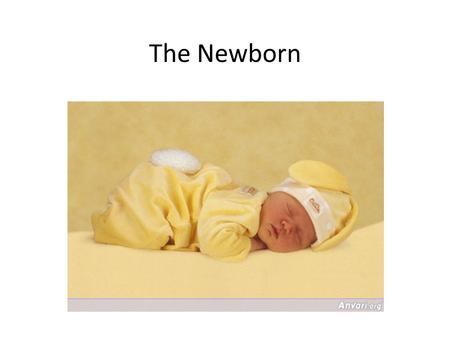The Newborn. Appearance of the Newborn Head is large for body – May be misshapen due to birth Fontanels: soft spots on the baby's head where the bones.