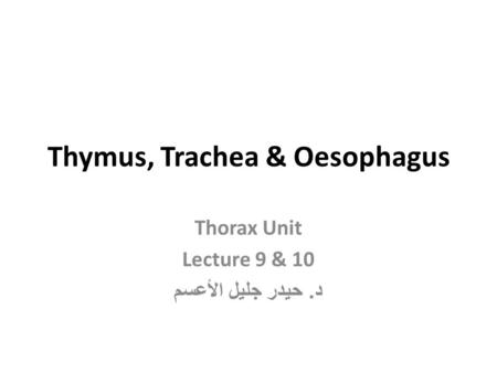 Thymus, Trachea & Oesophagus Thorax Unit Lecture 9 & 10 د. حيدر جليل الأعسم.