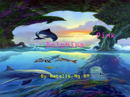 Pink Dolphins By Natalie Ng 8M. Dolphin's Diet Dolphins like to eat a lot of things for example… Fishes, these include croakers, lion-head fish, mullets.