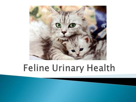 There are many reasons why cats develop urinary problems.