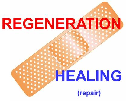 "REGENERATION HEALING (repair). LEARNING OBJECTIVES Review the normal physiology and concepts of cell proliferation, cell growth, cell ""cycle"", and cell."