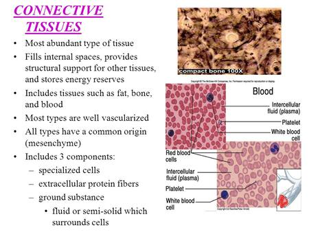 CONNECTIVE TISSUES Most abundant type of tissue Fills internal spaces, provides structural support for other tissues, and stores energy reserves Includes.