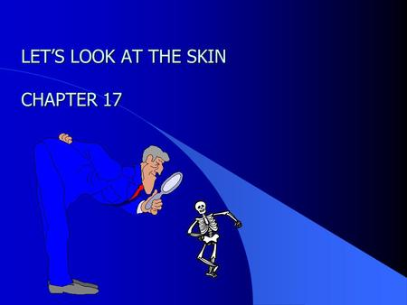 1 LET'S LOOK AT THE SKIN CHAPTER 17 2 OBJECTIVES Describe the structure & composition of the skin Describe the structure & composition of the skin.