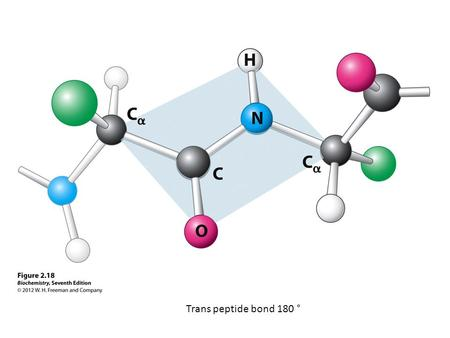 Trans peptide bond 180 °. 2e Structure Regular pattern of H-bonding Involves backbone (not side chains) C=O … H-N Several consecutive residues.