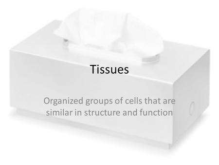 Organized groups of cells that are similar in structure and function