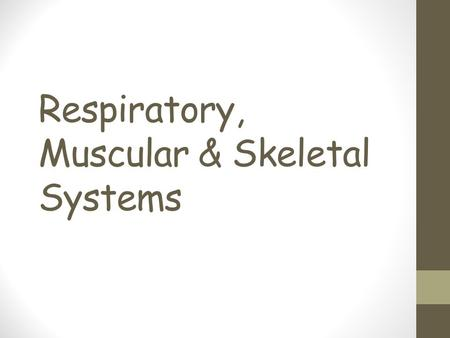 Respiratory, Muscular & Skeletal Systems. Specialized Tissues What are groups of similar cells called? What are the 4 basic types of tissues in animals?