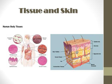 Tissue and Skin.
