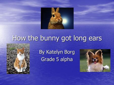 How the bunny got long ears By Katelyn Borg Grade 5 alpha.
