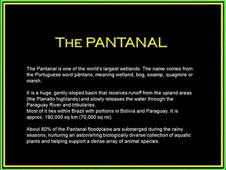 The PANTANAL The Pantanal is one of the world's largest wetlands. The name comes from the Portuguese word pântano, meaning wetland, bog, swamp, quagmire.
