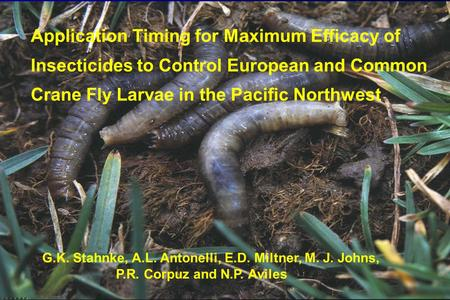 Application Timing for Maximum Efficacy of Insecticides to Control European and Common Crane Fly Larvae in the Pacific Northwest G.K. Stahnke, A.L. Antonelli,