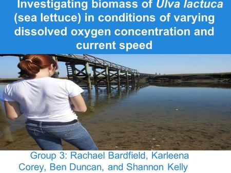 Investigating biomass of Ulva lactuca (sea lettuce) in conditions of varying dissolved oxygen concentration and current speed Group 3: Rachael Bardfield,