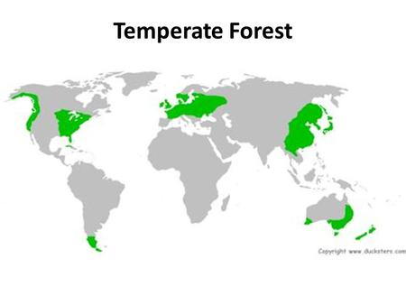 Temperate Forest. Geography: Northern Hemisphere Southern Hemisphere Climate and Temperature: Cool, rainy areas Avg. temperature is 75 2-5 feet of precipitation.
