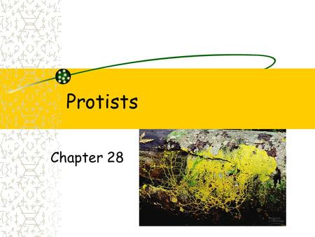 Protists Chapter 28. Protists Eukaryotes Not plants, fungi or animals.